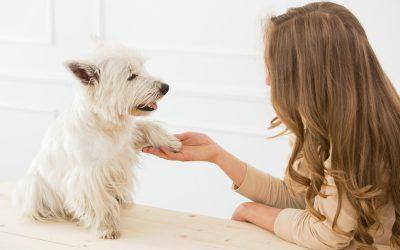 Ízületvédelem kutyáknak
