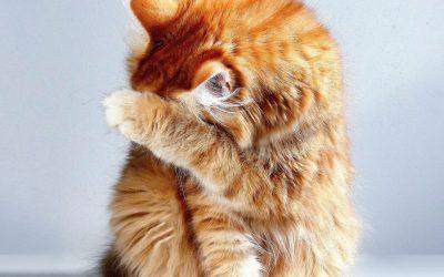 A macskák és a stressz