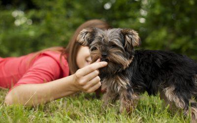 Milyen a legjobb kutyatáp kölyökkutyáknak?